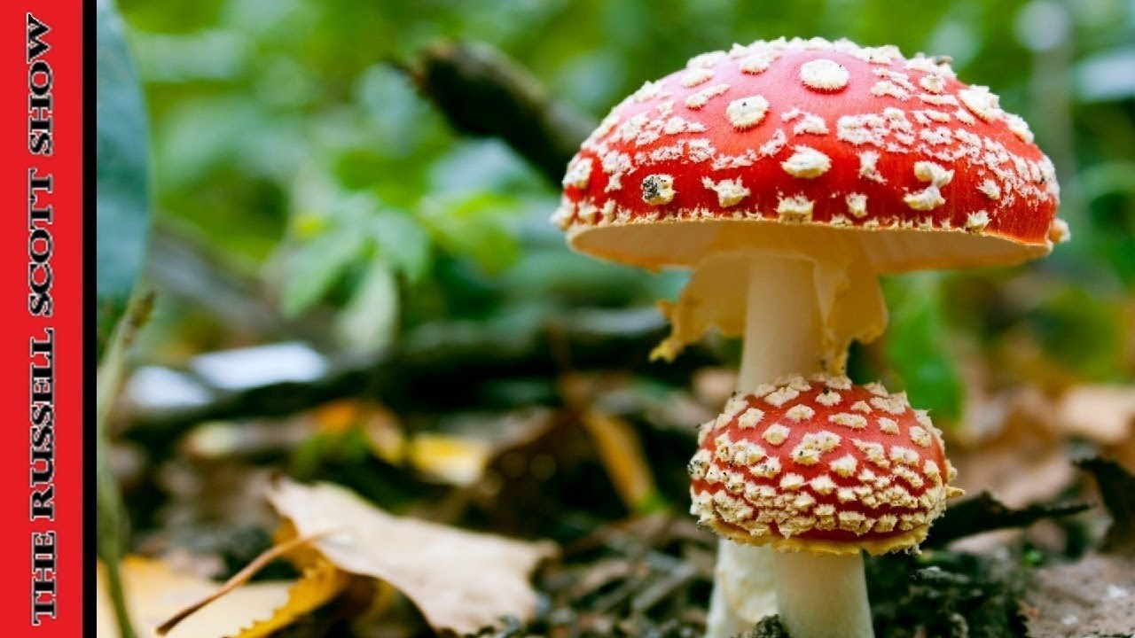 Image result for Fungi