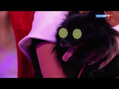 """Щпиц-гипнотизёр """"вырубил"""" 15 человек!"""