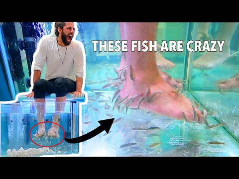 FISH EATING DEAD SKIN ON FEET (Fish Pedicure)