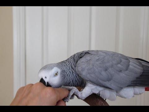 Teach Your Bird Biting is Not OK