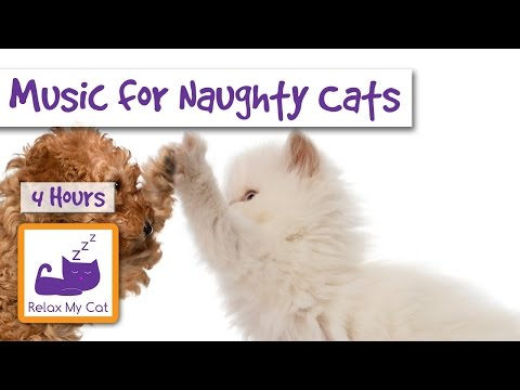Music for Naughty Cats and Kittens! Calm them Down and Make them Sleepy with Relax My Cat!