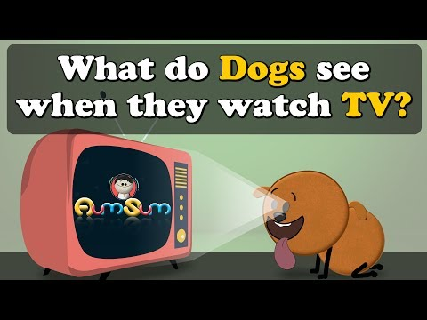 What Do Dogs See When They Watch TV? | #aumsum