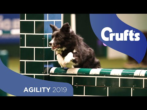 Agility – Crufts Singles Heat – Large (Jumping) | Crufts 2019