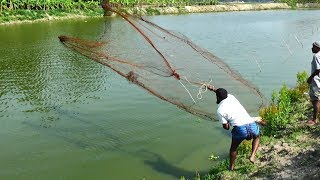 Net Fishing | Catching Fish With Cast Net | Net Fishing in the village (Part-334)