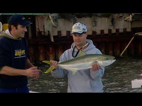 IFISH Port Augusta Kingfish