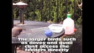 Chicken Wire - Milk Jug - Left Wing Bird Feeders
