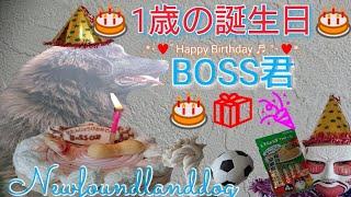6月13日と言えば❕ そう❕ BOSS君の1歳の誕生日です♥ 見る見るすくすく大...