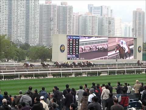 Hongkong Horserace Shatin race track - 沙田