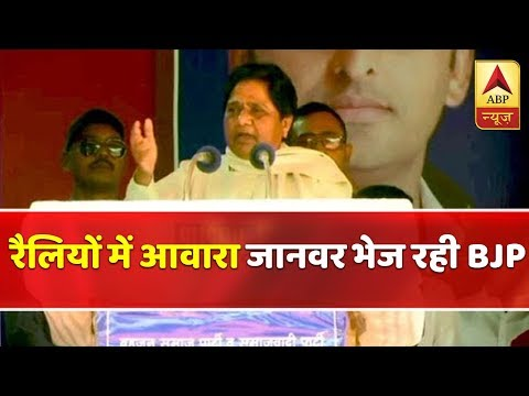 Mayawati Alleges BJP Of Deliberately Sending Stray Cattle At Her Rally Site | ABP News