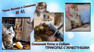Смешные Коты и Собаки. ПРИКОЛЫ С ЖИВОТНЫМИ. Такие Милые и Смешные # 41