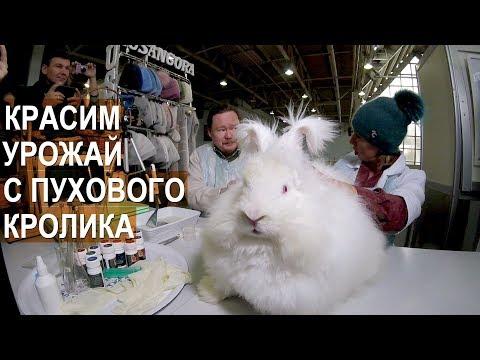 Вопрос: Какие породы пуховых и меховых кроликов есть на сегодняшний день?