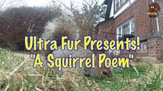 """""""A Squirrel Poem"""""""