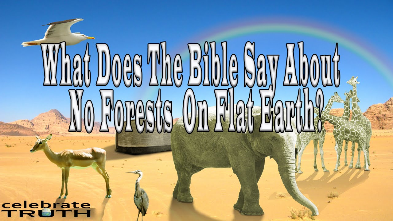 WHAT DOES THE BIBLE SAY about