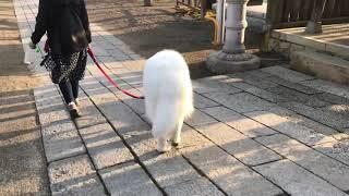 毎朝、我が街の鎮守神社(武田須賀神社)にお参りをして来ます。 ブランシ...
