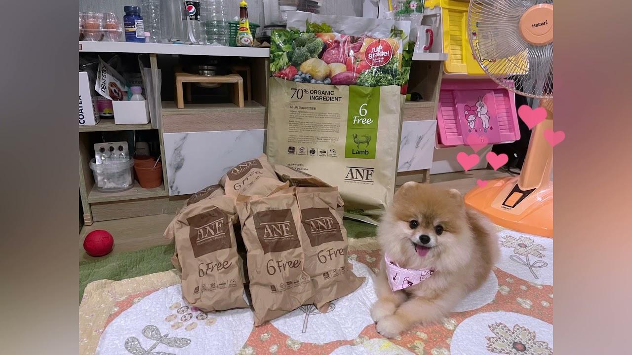 รีวิวอาหารใหม่ ANF Organic [2T Diary] | อาหาร สุนัข anfเนื้อหาที่เกี่ยวข้องที่สมบูรณ์ที่สุด