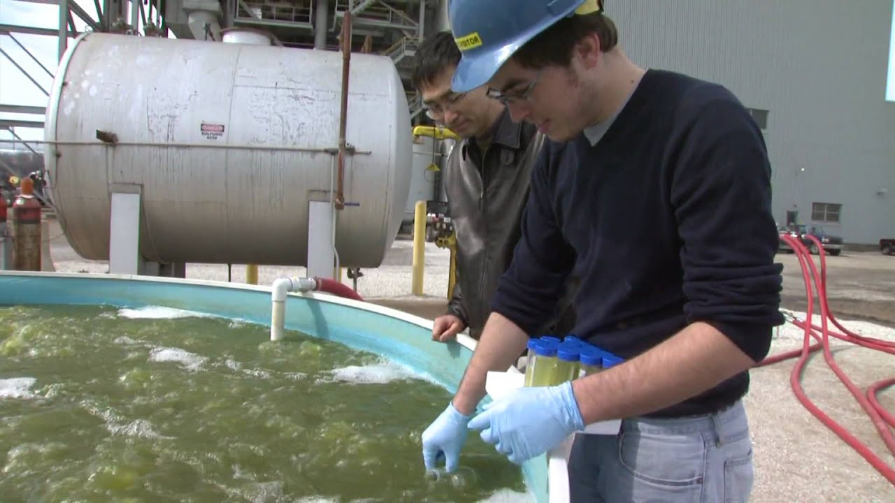how to turn algae into fuel
