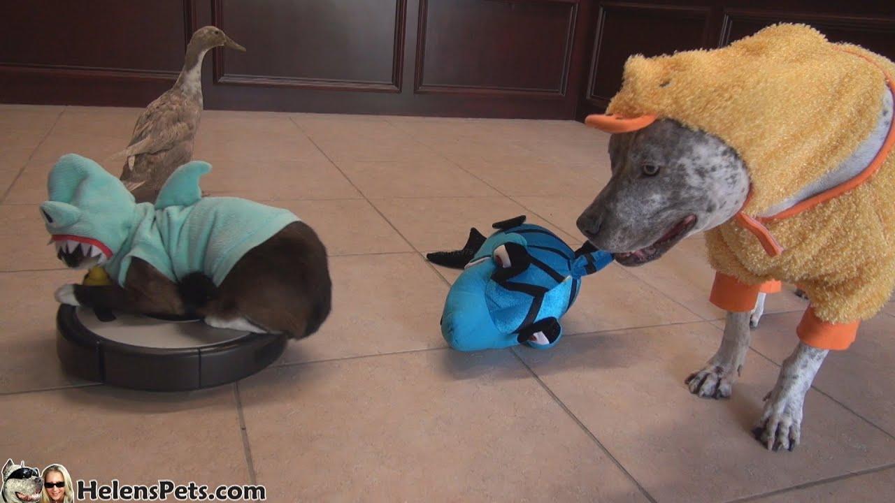 Roomba Cat Shark Dog