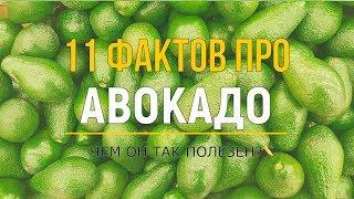 11 фактов про авокадо. Чем полезен авокадо? + Самый простой классический рецепт гуакамоле.