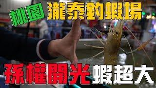 【老蟹愛釣蝦】桃園瀧泰釣蝦場挑戰大蝦公、蝦超大,想不到釣了這麼多...