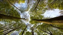 hqdefault - Alte Buchenwälder: UNESCO-Weltnaturerbe in Hessen und Deutschland
