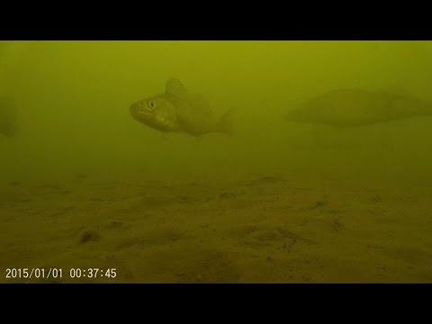 видео: Съемка подо льдом. Реакция судака и окуня на балансир и блесну