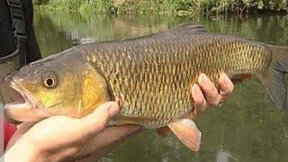 ловля голавля крупная рыба река Уфа