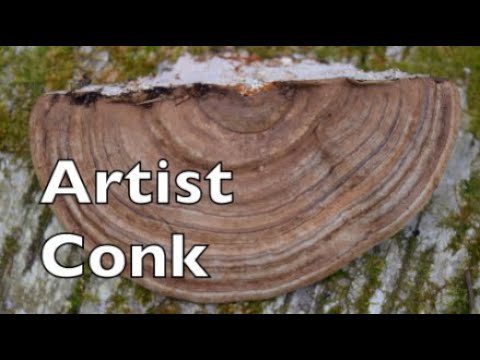 Artist Conk Mushroom