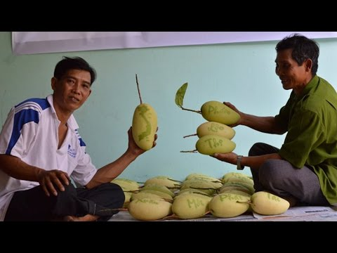 Growers of Vietnam's bizarre fruits worry over fickle weather as Tet draws near