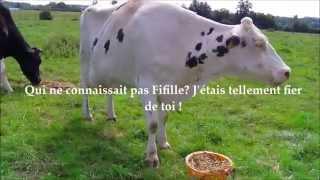 Fifille, une vache, une vie