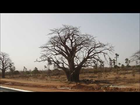 TVD-Dakar; Day #12, Trip: Senegal, Dakar, Saint-Louis, Mauritania Border, Parc National Diawling
