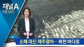 소떼 대신 제주광어…북한 바다에서 기릅시다 thumbnail