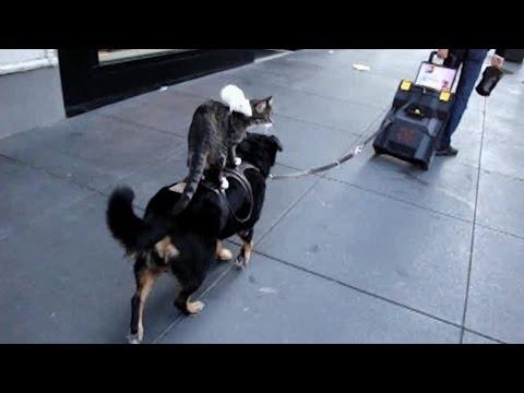 Animals Riding Animals: Compilation