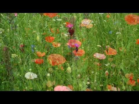 Blumenwiese - Flowerpower