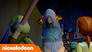 Черепашки-ниндзя | Человек-голубь | Nickelodeon Россия