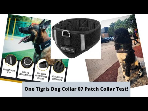 Service Dog Collar Test! One Tigris Training Patch Velcro Dog Collar 07 Try-Out & Review!