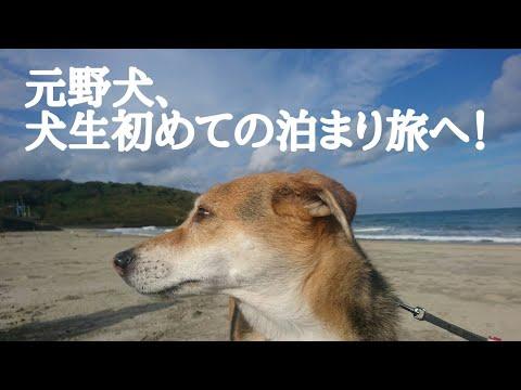 【🐶保護犬と初めてのお泊まり旅♥】保護犬はーちゃんVlog《鳥取旅行 後編》