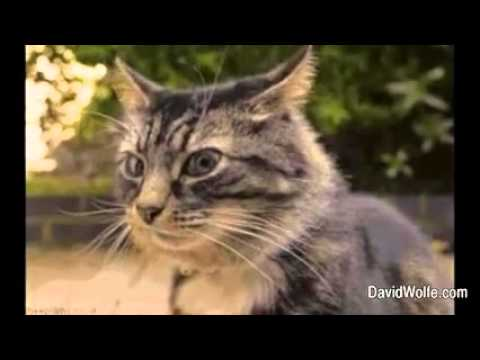 funny-cats-video-compilation-fall-in-love