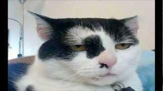 Funny cats - koty i głos, zabawne koty #1