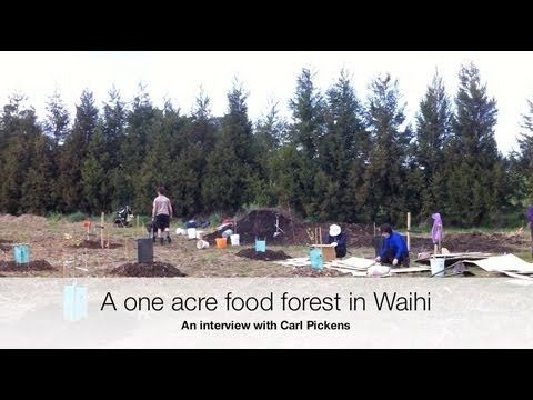 Waihi Food Forest - 1 Acre and growing