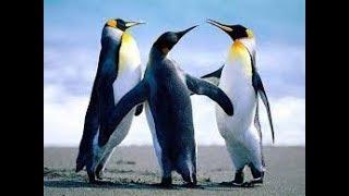 Класс птиц. Биология 7 класс
