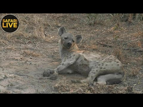 safariLIVE- Sunrise Safari - September 28, 2018