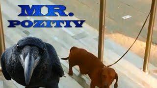 Ворона достает собаку новое видео 2015