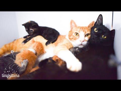 LIVE: Rescue kitten nursery!  TinyKittens