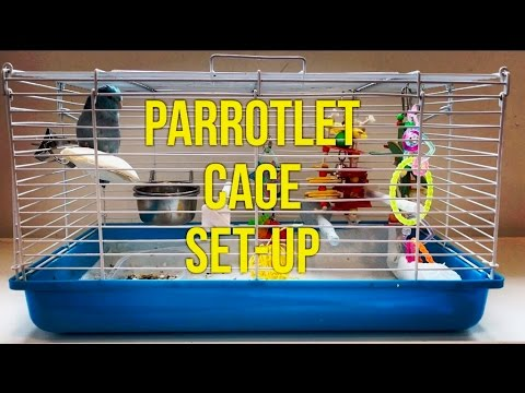 HOW-TO TAME A PARROTLET:  HOW-TO SET UP A PARROTLET CAGE