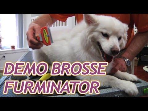 Brosse Furminator pour chien et chat - YouTube