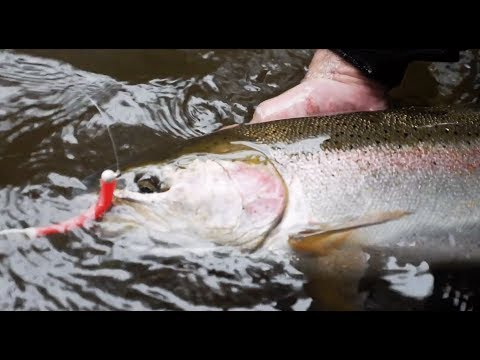 Early Winter Steelhead Fishing With SURPRISE CATCH! | Addicted Life Ep. #19