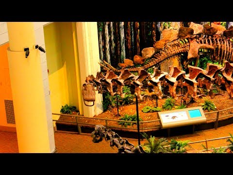 Carnegie Museum Dinosaur Exhibit - Oakland, Pennsylvania