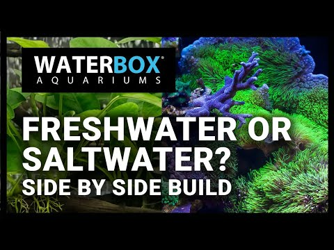 Freshwater Or Saltwater? Side By Side Build