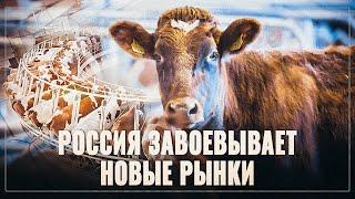 Ужасные новости для конкурентов! Молочная отрасль России растёт и развивается!
