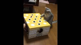 NO.10デビ♂【猫もぐらたたき大会】-Whac-A-Mole of cat- thumbnail